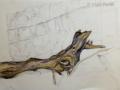 Zeichnung_Weinrebe_mWa